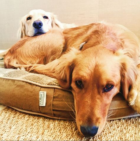 Friday seems a lot farther away in dog years. (Photo via Instagram: jakeandmaggiela) L.L.Bean Dog Beds