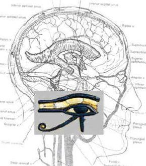 Eye of Horus Brain : The Internal Stargate (Great read about the pineal gland and how the use of Kundalini energy will activate it) Ancient Aliens, Ancient Egypt, Les Chakras, Pineal Gland, Pituitary Gland, Eye Of Horus, Stargate, Illuminati, Sacred Geometry