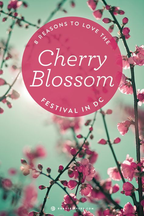 8 Facts About Washington Dc S Cherry Blossom Festival Cherry Blossom Festival Cherry Blossom Washington Dc