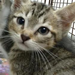 Available Pets At Austin Animal Center In Austin Texas Animals Cat Adoption Cute Animals