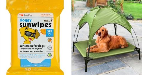From loungers, water fountains, and even sunscreen wipes, BM has got your pooch's summer needs covered, so you two can enjoy more fun under the sun!