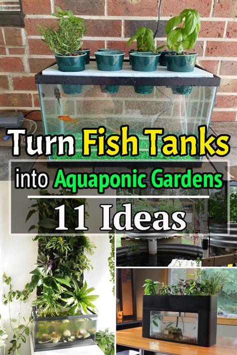 Turn Fish tanks into Aquaponic Gardens ! 11 Ideas!