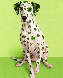 St Patricks Day St Patty/'s Day Dog Saint Patrick Dog Gingham Dog Bandana St Patrick/'s Dog Clover Dog Bandana St Patrick Dog