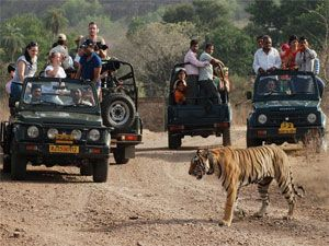 Ranthambore Jungle Safari Tickets Now Get Confirmed Ranthambore