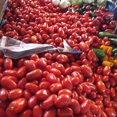 Fresh from the Guatemala markets organic tomatoes. No GMO in Guatemala. Price of a pound of Guatemala Tomatoes $2.00 USD. #guatemala #guatemalacity #panajachel #lakeatitlantours #lakeatitlan #antiguaguatemala #antigua #guatemalacity #guate #markets #chichimarket #guatemarkets #tomatoes #tomato  #organic #ontario #NOGMO #gmo #monsanto #elsalvador #panama #panamacity #cervesa #centralamerica