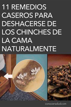 Como Acabar Con Las Chinches En Casa 11 Remedios Caseros Para Deshacerse De Los Chinches De La Cama