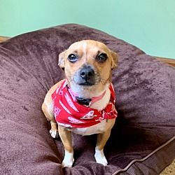 Available Pets At Rescue Dogs Rock Nyc Inc In New York New York