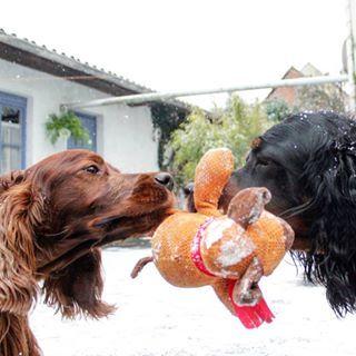 3 Grunde Warum Du Mit Deinem Welpen Keine Gute Bindung Aufbauen Wirst Und Wie Du Es Besser Machst Hundebl Hunde Futter Hundekekse Geburtstagskuchen Fur Hunde