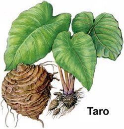 70 Best Beneficial Roots Images Herbalism Health Healing Herbs