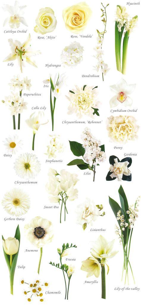 white flower chart