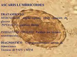 quais os sintomas de ascaris lumbricoides