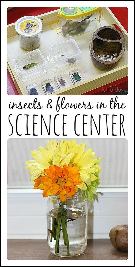 Creating a nature table for children to explore science and nature.  This one centers around an insect and plant theme.  So much learning and fun!