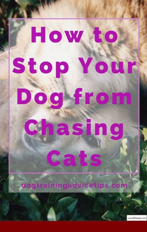 Best Dog Training Tips Biting And Pics Of Train A Dog Not To Bark