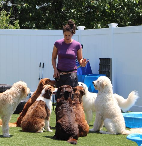 Hooksett NH Dog Training