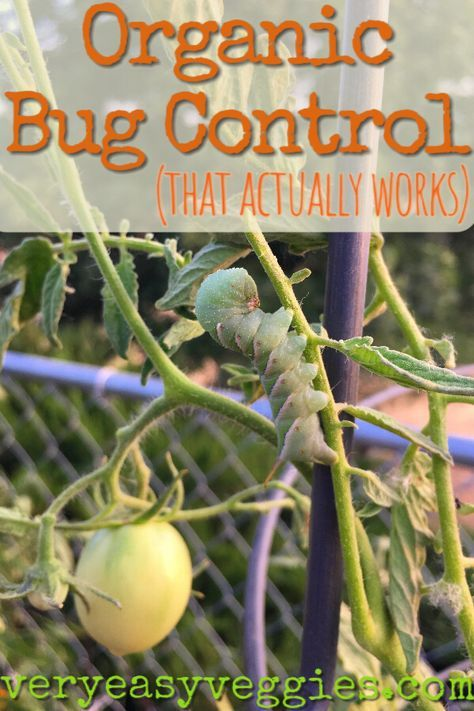 Organic Bug Control (That Really Works) ⋆ The Very Easy Veggie Garden