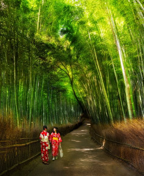 I was thinking that when travel restrictions end again, the first place I will go after Austin is back to Japan. This photo is from my last trip there when we saw a few of these ladies wearing outfits that complemented the green bamboo forests of Kyoto perfectly. It's like Japan is a random-photo generator where interesting sights are popping up around you all day long. #TreyRatcliff #japan #hdr #bamboo #kyoto