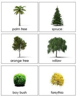 Types Of Plants Sorting Cards Tree