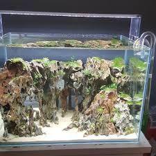 Merveilleux Resultado De Imagen De Aquascape Iwagumi Dragon Stones
