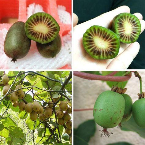 200pcs Gold Yellow Kiwi Fruit Seeds Bonsai Fruit No-Gmo Kiwi Seed Garden Plant