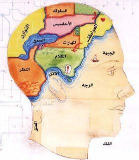 1 ت تقسيم أجزاء الدماغ و عملها أسرار عالم الدماغ Classroom Oven Mit Oven