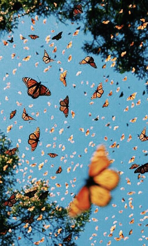 butterfly wallpaper Monarch butterflies swarming flying around in the beautiful blue sky. Wallpaper Pastel, Butterfly Wallpaper Iphone, Iphone Background Wallpaper, Aesthetic Pastel Wallpaper, Aesthetic Backgrounds, Aesthetic Wallpapers, Summer Wallpaper, Disney Wallpaper, Screen Wallpaper