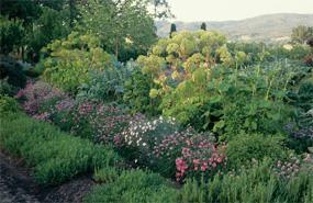 Deer Resistant Collection | Deer Resistant Flowers and Plants | Bloom IQ