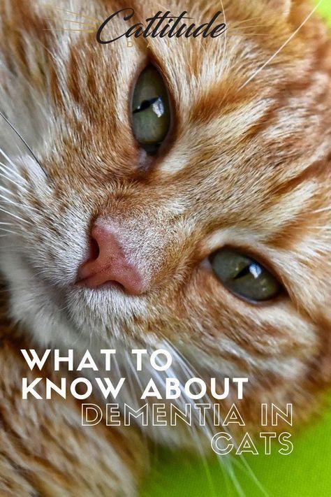 200 Cat Care Ideas Cat Care Cat Parenting Cat Care Tips