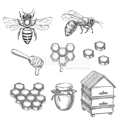 Coloriage Essaim Dabeille.Honey And Bee Sketch Vector Illustration Honeycombs Pot