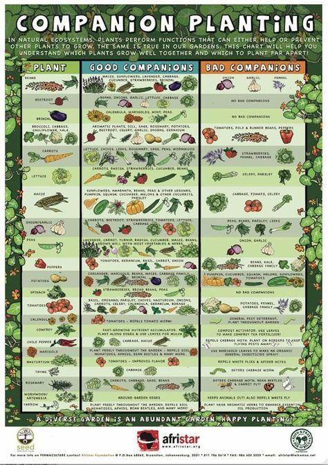 Companion planting info graph.