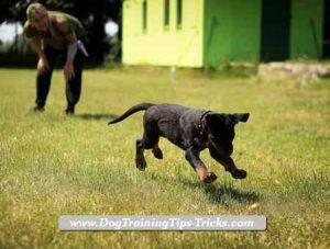 Bent Dog Training Hacks Dogmodel Femaledogsaccessories