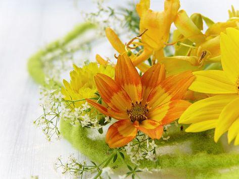 Fiori Arancioni E Gialli.Immagine Gratis Su Pixabay Fiore Giallo Arancione Fiori