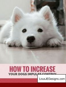 How To Train Your Dog From Potty Pads To Outside And Pics Of Best