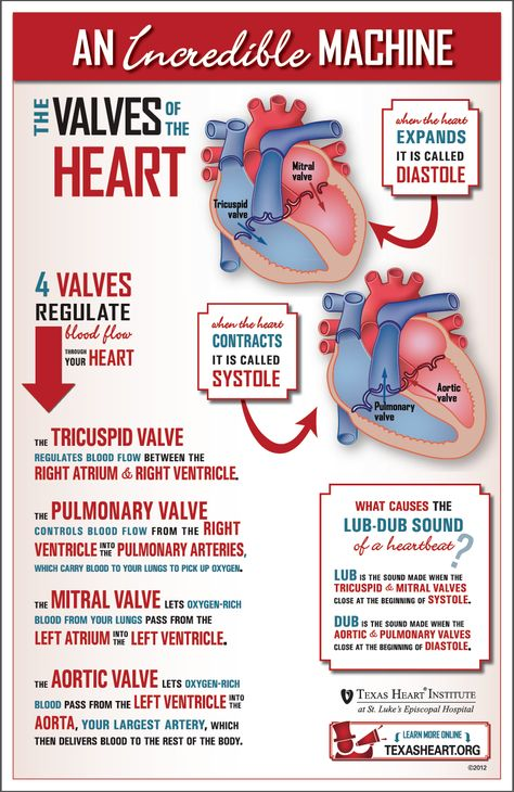 Fun infographic about the heart valves, part of the incredible cardiovascular machine.