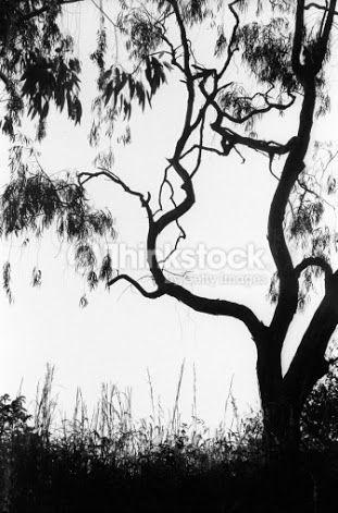 Gum Tree Silhouette Google Search Tree Silhouette Tree