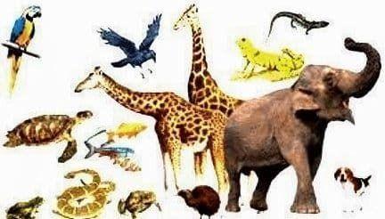Contoh Gambar Ilustrasi Hewan Invertebrata Hewan Vertebrata Pengertian Materi Ciri Dan Contohnya Contoh Hewan Vertebrata D Gambar Hewan Ilustrasi Hewan Hewan