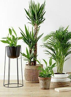29+ Plantas artificiales para salon ideas in 2021
