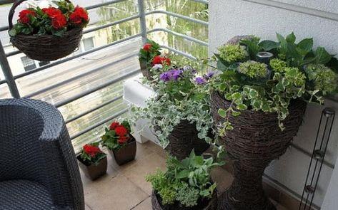 Cieniolubne Kwiaty Balkonowe Co Posadzic Na Balkonie Polnocnym I Wschodnim Zielony Ogrodek Plants Balcony
