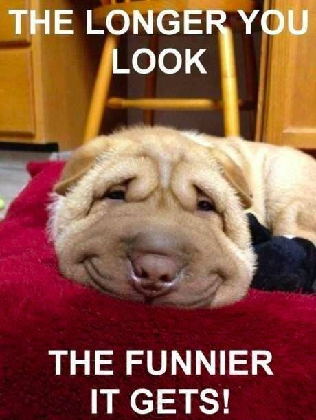 Funny Animal Feel Better Pictures