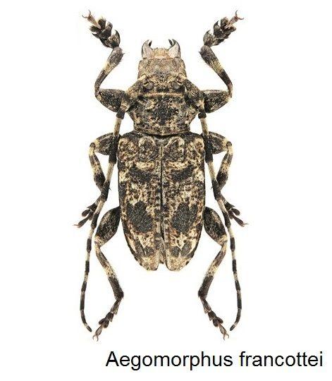 Longhorn Beetle おしゃれまとめの人気アイデア Pinterest ヨシオカ カミキリムシ