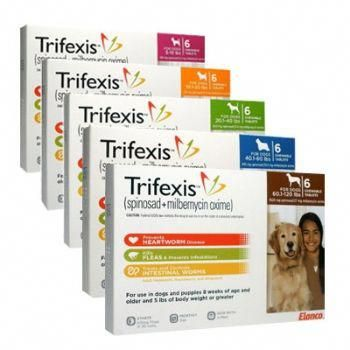 Cats Craigslist Catsarmy With Images Flea Treatment Medication For Dogs Dog Death