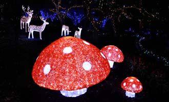 ff3af577ca35a80fe78febe904f3bb81  christmas lights hunters - Hunter Valley Gardens Christmas Lights Discount Code