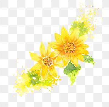 Watercolor Hand Drawn Yellow Chrysanthemum Chrysanthemum Yellow Flower Watercolor Hand Drawn Flower Hand Painted Flowers Paper Painting Watercolor Flower Png Flower Drawing Flower Crown Drawing Flower Illustration