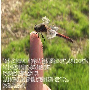 無農薬 お米 有機米 コシヒカリ 自然農法 30年産 新米 石川県産 辻本さんの有機栽培米 コシヒカリ 食用 玄米 30kg