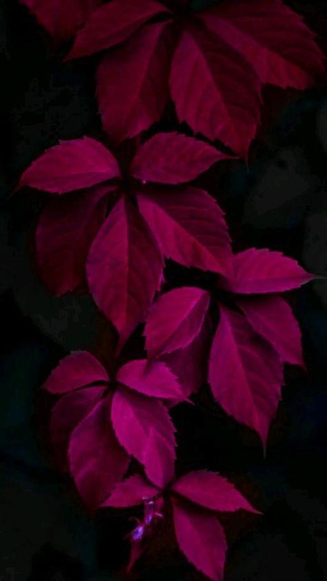 Leaves Leaf Wallpaper Hd Wallpaper Leaves Hd Wallpaper Spring Wallpaper Colorful Leaves  Wallpaper