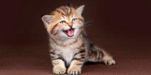 Cuántos Años Vive Un Gato Descubre Cuanto Viven Los Mininos Gatos Curiosidades Animales Animales Nocturnos