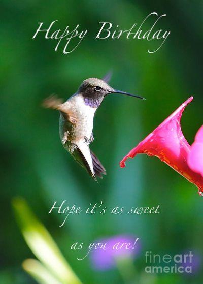 Sweet Hummingbird