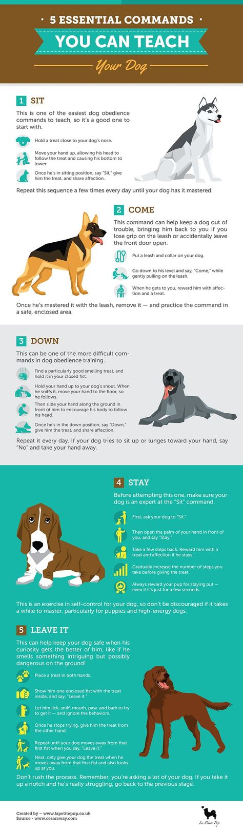 Dog Training 101 – How To Train Your Dog
