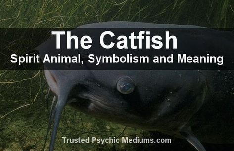 The Catfish Spirit Animal (With images) | Animal spirit guides, Spirit  animal, Spirit animal meaning