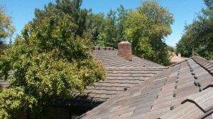 How To Avoid Roof Rats In Phoenix, Arizona | Arizona Roofing Services |  Pinterest | Roof Rats