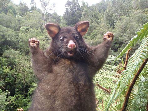 This Optimistic Possum Just Sparked A Hilarious Photoshop Battle | Bored Panda